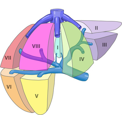 Hepatic segments (Couinaud classification) foie-vue-antero-laterale-segmentation-hepatique