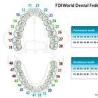 Tooth number FDI-World-Dental-Federation-notation