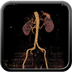 Clinical case 9 - Polytrauma patient struck by a foal in a field